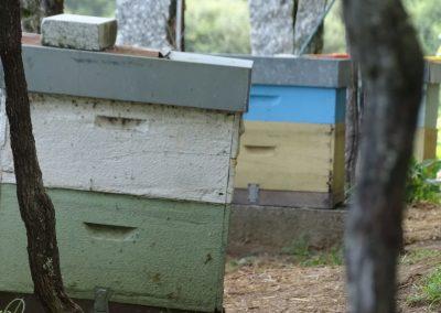 vinha-abellas-moraima