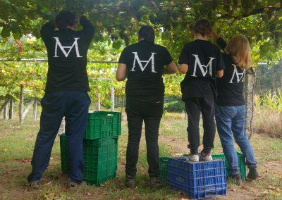 vendima-moraima-albarinho-2018
